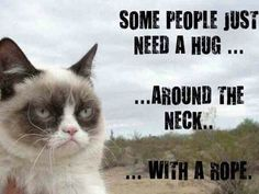 Grumpy cat quotes, grouchy quotes, grumpy cat jokes, grumpy cat humor, grumpy cat pictures …For more hilarious quotes and jokes funny visit www. Grumpy Cat Quotes, Funny Grumpy Cat Memes, Cat Jokes, Funny Cats, Funny Animals, Funny Jokes, Grumpy Kitty, Hilarious Quotes, Funniest Quotes