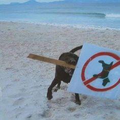 Dogs don't care (3) I cani se ne fregano