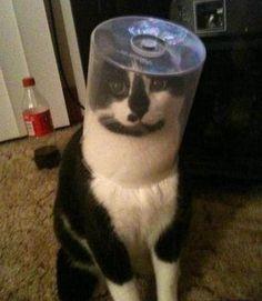 おかしい子猫 - Google 検索