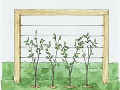 living fence - cool idea for west side of deck...would hide the stuff under the deck.  Trellis idea