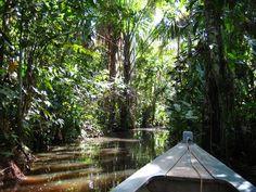 Puerto Maldonado, Peru --- I will always remember the Eco Lodge, monkeys, spiders and parrots!