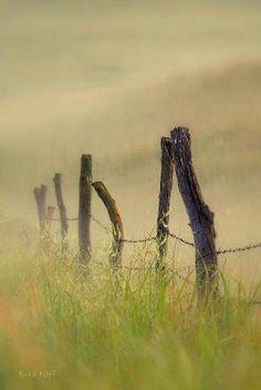 JUST PLAIN COUNTRY CHARM <3 Foggy Fence Posts, Kansas (Brad Neff photo)