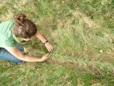 Grass Braiding