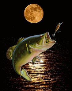 Fish Wallpaper, Painting Wallpaper, Wildlife Paintings, Wildlife Art, Bass Fishing Pictures, Fish Jumps, Gone Fishing, Fishing Stuff, Fish Sculpture