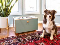 The budget decorating pros at HGTV share trendy DIY accessory and home decor projects you can make to freshen up your home's style for less. Built In Storage, Diy Storage, Animal Projects, Diy Projects, Wooden Projects, Dog Feeding Station, Raised Dog Bowls, Diy Dog Toys, Diy Network