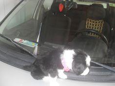 Mel - nosso cão. 04 dezembro de 2015 - 110284110529189782763 - Álbuns da web do Picasa