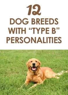 12 Dog Breeds with Type B Personalities http://iheartdogs.com/12-dog-breeds-that-have-type-b-personalities/