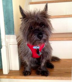 Col. Potter Cairn Rescue Network Post Adoption Blog: Barley Celebrates 1 Whole Year in Forever!
