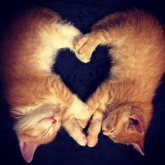 【猫=愛】 ハートの形を作る猫さんたちの画像集