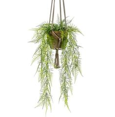 25gbp Artificial Plumosus Hanging Fern