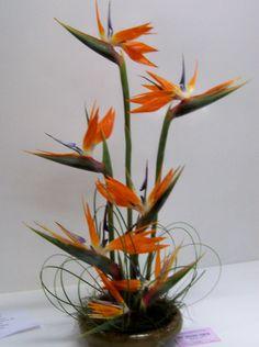 Floral art Artistic expression:  Strelitzia 1st prize show 2012