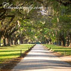 An Avenue of Oaks greets visitors upon arrival to #BooneHallPlantation