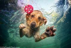 Playing Catch with Dogs Underwater  Seth Casteel    You have to check this guys site out especially if you love animals.