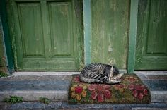 * * Cats like to sleep softly. ~ Theoticrus