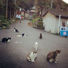 """It's a busy day on Cat Island in Japan! My favorite detail is the cat clinging for dear life to a palm tree in the distance. Photo by <a href=""""http://instagram.com/p/spAm3uxa1X/"""">naore</a> on Instagram."""