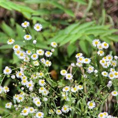 """#flowers #flower  #petal #petals #nature #beautiful #love #pretty #plants #blossom #sopretty #spring #summer #flowerstagram #flowersofinstagram…"""