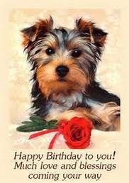 Yorkie Birthday Cards More Beautiful Yorkies Pinterest Yorkies