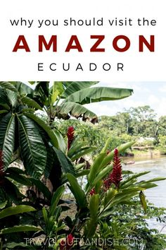The Ecuador Amazon w