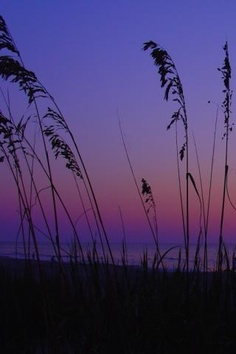 sea oats & sunset Wild Flowers, Northern Lights, Sunrise, Beautiful Places, Sea, Pictures, Photos, World, Sunsets