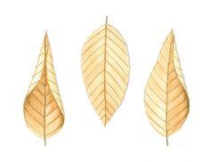 "Fall Leaves Painting, Original Botanical Illustration, Beech Leaves, Brown Nature Art, Winter Leaf Art, Tan Home Decor, Watercolor 8"" X 10"". $40.00, via Etsy."