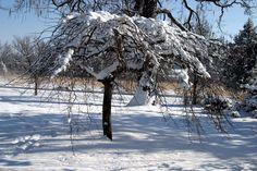 saateeenvarjojalava talvella