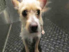 Adoptable Dogs At Kern County Shelters