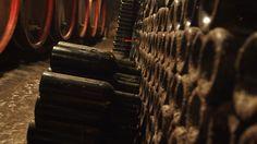 Egy borospince - A cellar