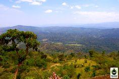 Fair Trade Certified coffee growing region in Ethiopia.