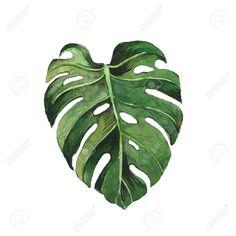 Image result for monstera leaf clipart