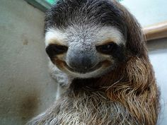 Three-Armed Sloth by Nyall & Maryanne, via Flickr