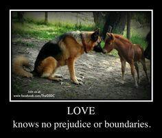 GSD Love