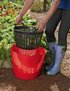 Rinse veggies in the garden and then water your plants using the rinse water! #GardeningIdeas
