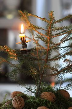Rustic Twiggy Pine...metal clip on candle holder...small grubby lighted...candle.