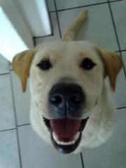 say cheese -Ozzy my blonde  dog friend :-)