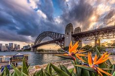 Sydney Harbour Bridge from Kirribili.  This is an old composition I forgot I had. Looking back at it I really like it. I like the vibrant orange flowers in the foreground combined with the stormy sky and sun burst to the right.  The photo is an example of focus stacking. An image with the foreground in focus was combined with an image with the background in focus to ensure sharpness back to front.  __________  Nikon D810  Nikon 14-24mm f2.8G 14mm 1/20 s f11 ISO 64…
