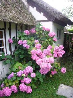 Cottage in Honfleur, France : Authentic Normandy Chaumière