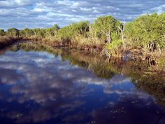 Marine Environments Waterways (Jim Jim creek wetlands)