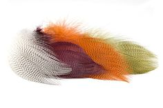 Mallard Barred Feathers - excellent for tying dry, wet, nymph and salmon flies. Crappie Fishing, Fly Fishing, Catfish Bait, Fly Tying Materials, Mayfly, Salmon Flies, Mallard, Wet And Dry, Light In The Dark