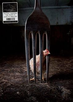 Truth Campaign via Voiceless: Animal Protection Institute - restaurante Creative Advertising, Print Advertising, Print Ads, Advertising Campaign, Truth Campaign, Ad Design, Graphic Design, Desgin, Factory Farming