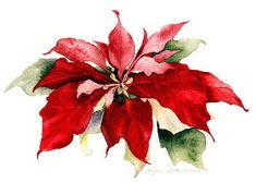 Watercolor by Lyn Snow: Poinsettia Watercolor Christmas Cards, Watercolor Cards, Watercolor Flowers, Watercolor Paintings, Watercolors, Watercolor Images, Noel Christmas, Christmas Pictures, Christmas Crafts