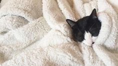 Freddo  weekend = copertina! Giornata perfetta da passare sotto le coperte! Buona giornata a tutti  Frio  fin de semana = manta Dia perfecto para pasarlo bajo la manta! Buenos días a todos #cold #kitty #cat #instacat #catsofinstagram #mood #saturday #sabado #sabato #copertina #manta #blanket #frio #freddo #instamood #picoftheday #mirtasmood #kyokosmood #bcn #barcelona