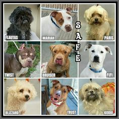 WONDERFUL SAFES 9 Precious Lives. Thank You to the Rescues/Adopters. Be Safe Loved and Happy Sweethearts. NYC. URGENT DEATH ROW DOGS. - Cath Beevers - Google+