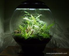 My BiOrbAir terrarium as pictured on 8th December 2015.