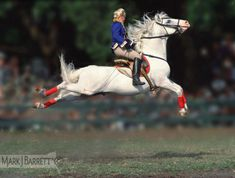 Woman performing Capriole on Lipizzaner horse.  Herman's Lipizzaner Stallion show