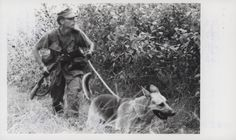 "Larry Lane Moves Along a Hedgerow With His Scout Dog, 1968 ""Alert: Corporal Larry D. Lane, 22 (Columbus, Ohio), moves along a hedgerow with his scout dog 'Trooper' while under enemy fire. Lane was attached to the 5th Marine Regiment, 1st Marine Division on Operation Maui Peak (official USMC photo by Gunnery Sergeant Chuck Lane)."" From the Jonathan Abel Collection (COLL/3611), Marine Corps Archives & Special Collections. OFFICIAL USMC PHOTOGRAPH"
