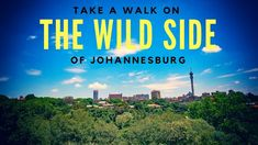 Take a Walk on the Wide Side of Johannesburg Concrete Jungle, Walk On, Things To Do, Take That, Things To Make