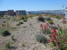 Nature en Toit - Le Blog: Sur les toits de Marseille