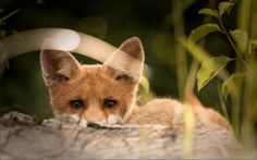 Progress for animals! Luxury fashion house Michael Kors has announced they are GOING FUR-FREE!