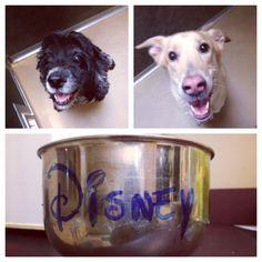 Disney & Bailey <3