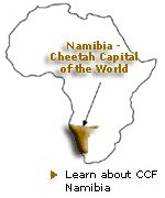 Cheetah Conservation Fund headquarters outside Otjiwarongo, Namibia ~ Cheetah Conservation Fund www.cheetah.org